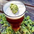 Indian Pale Ale - IPA
